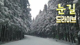 제주도. 눈길 드라이브. 사려니 숲길,샤이니 숲길 (브이로그)