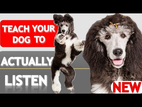 How to Teach Your Puppy to ACTUALLY Listen to You When it Counts! (Real Life Leave It Explained!)