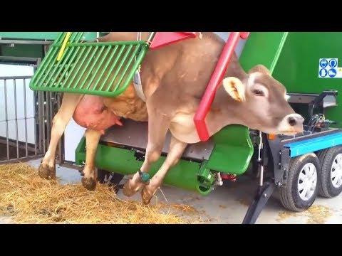 Amazing Food Processing Machines | Beef Rib Cutter