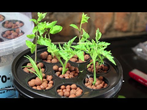 Aero-Pot Aeroponics System Review - My new Hydroponics Toy