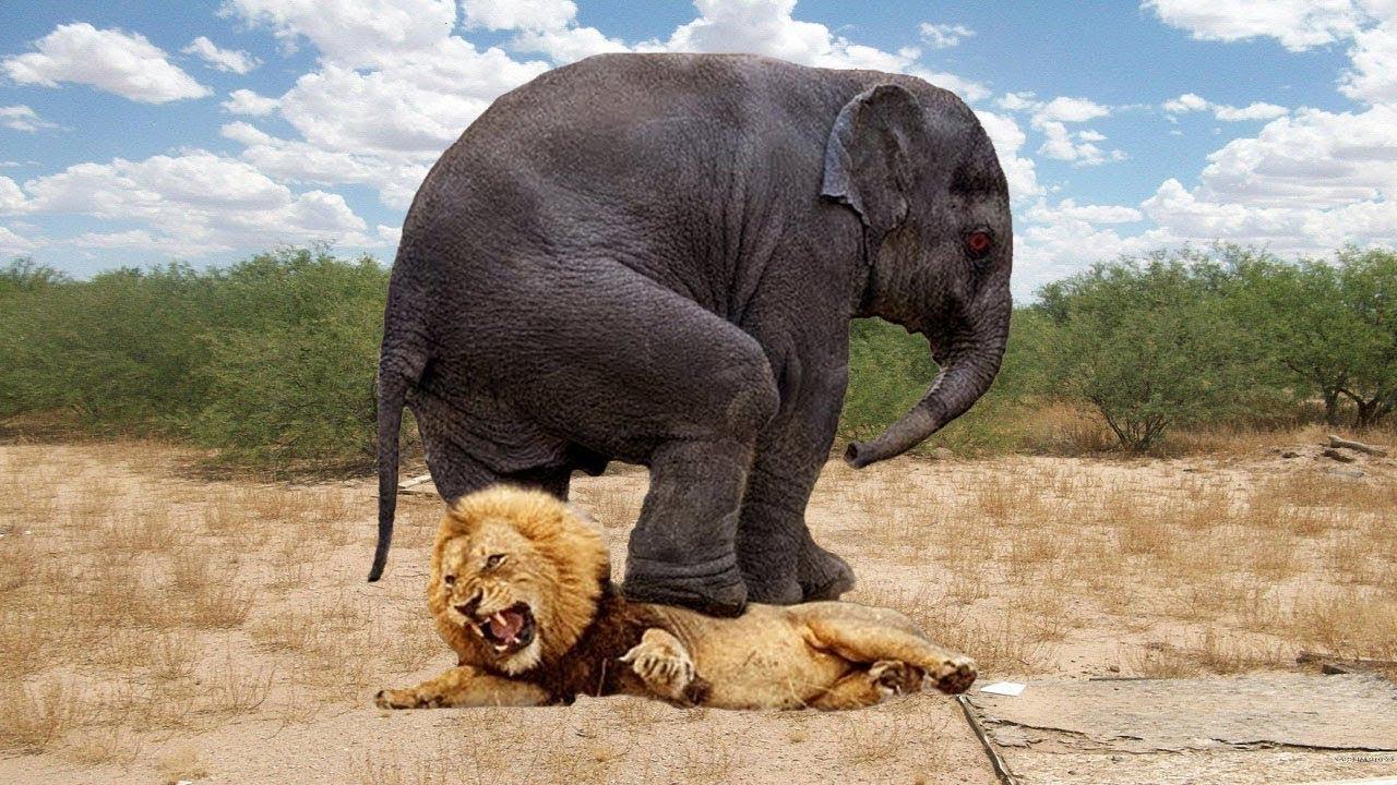 7 حيوانات حطمت اسطورة أن الاسد ملك الغابة