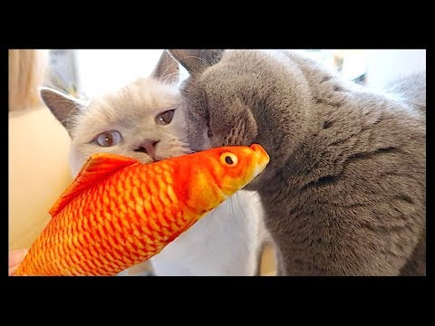 catnip-fish!-|-chris-&-eve