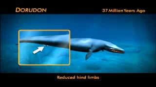 Evolution of Whales Animation
