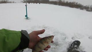 Зимняя рыбалка трудовой Окунь 2021