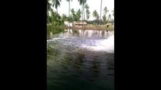 Prawn Farm - Bhimavaram - West Godavari District