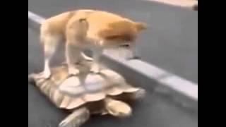 Переезд короткие лучшие видео и смешные приколы с животными