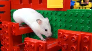 My Funny Pet Hamster in Lego Obstacle Course