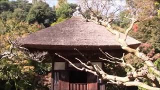 ★10 鎌倉で一番美しい禅庭園の足利尊氏ゆかりの長寿寺、12月にはモミジも紅葉す④