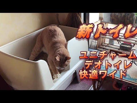 12個めの猫トイレ購入