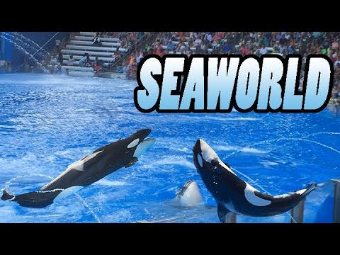 Shamu's Happy Harbor | Orlando Florida SeaWorld