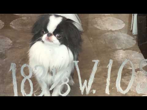 Laura Lobdell Store Shop Dog Enso Japanese Chin. Champagne Jewelry Designer. #Champers #WindowMeow