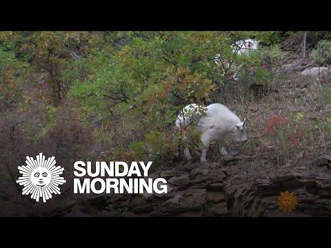 Nature: Black Hills Of South Dakota