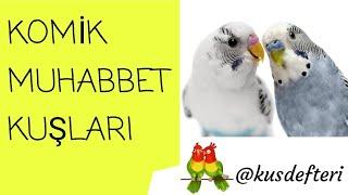 Komik muhabbet kuşları