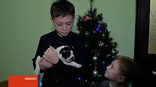 Щенок от президента: Владимир Путин исполнил мечту школьника из Хакасии
