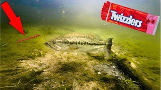 CANDY Lure Fishing CHALLENGE!!! (UNDERWATER FOOTAGE)