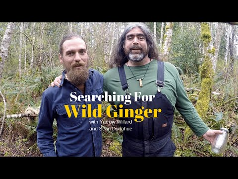 Snake Root Medicine | Wild Ginger with Herbal guest Sean Donahue | Harmonic Arts