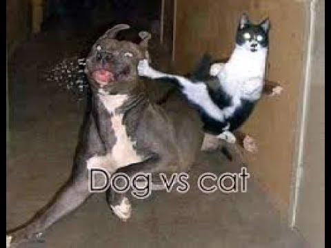 Dog Vs Cat Fight