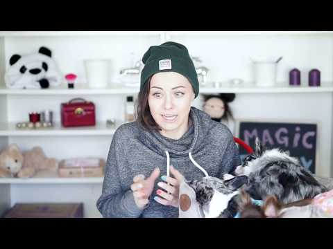 Смешное видео про собак до слёз смотреть