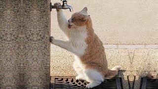 「かわいい猫」 笑わないようにしようとしてください - 最も面白い猫の映画 #360 thumbnail