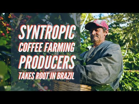 Searching For Dedication | Syntropic Coffee Farming Producers Takes Root In Brazil