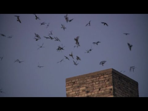 Thousands Of Birds Swarm Waukesha County Building During Migration