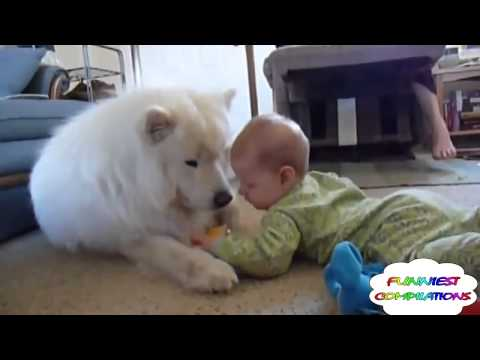 Animals Love Babies - Cute and Funny Compilation! - [August 2014]