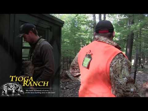 Red Stag Hunt - Guided Hunting Trips In PA | Tioga Ranch