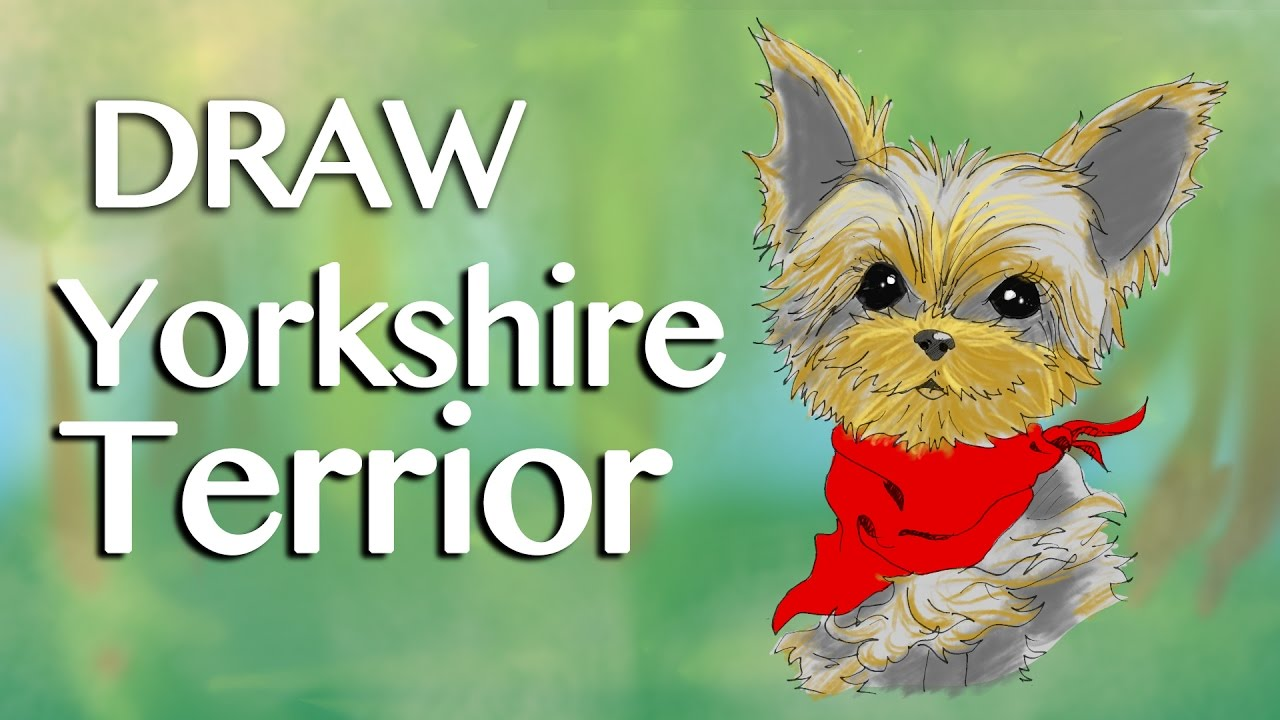 How To Draw Yorkies Featuring Orius Noble