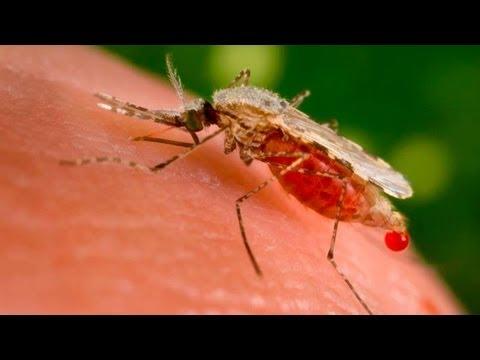 U.S. reports malaria vaccine breakthrough