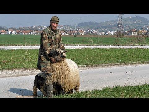 Moja ovca vrijedi više od 1000 maraka