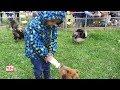 Luçon : les enfants à la ferme