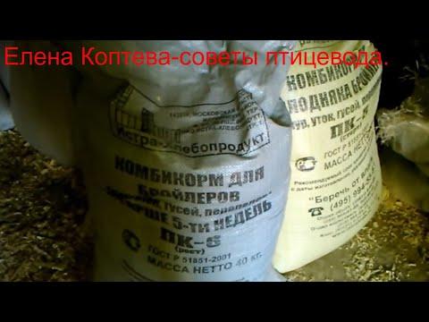 Рацион питания домашней птицы(куры, индейки,индоутки)