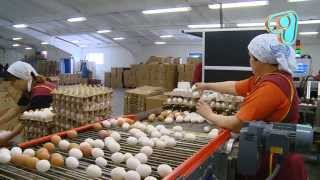 "ТВ программа ""Бизнес с нуля"": 2 сезон, 12 серия (22) Яйца"