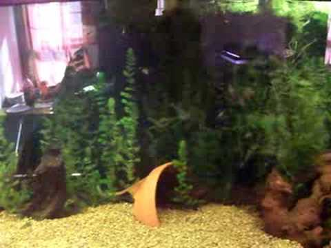Amazon River Basin Aquarium Youtube