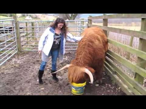 Sara Gruen - Water For Hairy Coos