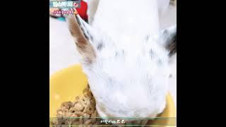 더리얼 닭고기 사료 먹방 ASMR