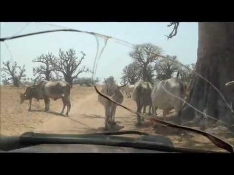 Sine-Saloum, Senegal by Taxi