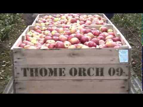Thome Orchards has long allegiance to Michigan apples