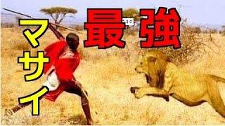 【閲覧注意】①ライオンが捕食できない巨大ゾウをマサイが狩り!②捕食バ...