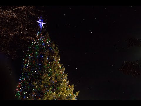 Boston Christmas Lights.Boston Common Christmas Tree Lighting Celebration Honors Century Long Tradition