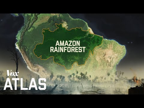 the-destruction-of-the-amazon,-explained