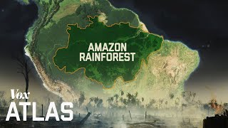 The destruction of the Amazon, explained