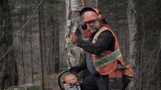 Comment abattre un arbre en toute sécurité et réduire les risques d'accident (FPFQ)