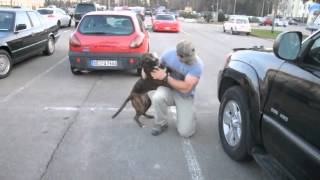 Dog Welcomes Home Soldier...Again thumbnail