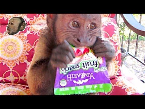 Capuchin Monkey Loves YumEarth Organic Fruit Snacks
