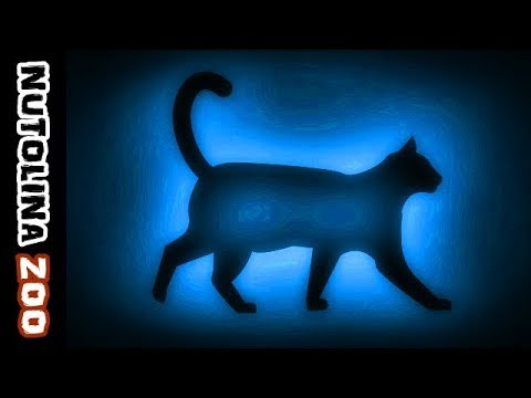 Download Miauwende katten / Kattengeluiden / Katzen miauen / Katten geluid