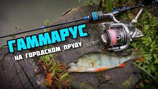 МОРМЫШИНГ Рыбалка с ГАММАРУС НаноСпинМСК ловля окуня на городском пруду