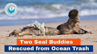 Two Seal Buddies Rescued from Ocean Trash