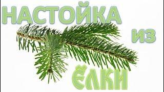 #сэмон 🌲 Настойка из елки 🌲 что же получилось ❓