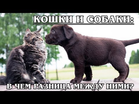 КАК КОШКА С СОБАКОЙ: В чём разница между кошками и собаками | Факты про Животных | АУДИОКНИГИ
